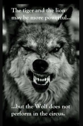 33+ Wolf Quotes & Saying, Inspiring & Motivational To Pump ...