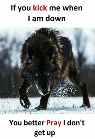 33+ Wolf Quotes & Saying, Inspiring & Motivational To Pump
