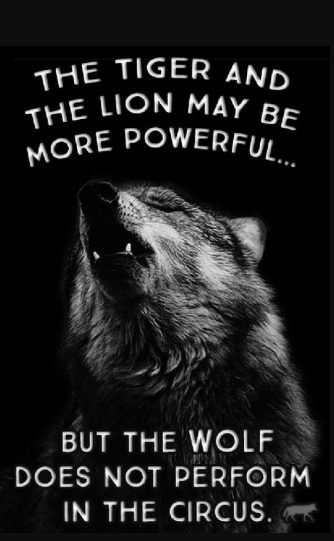 wolf picture quotes