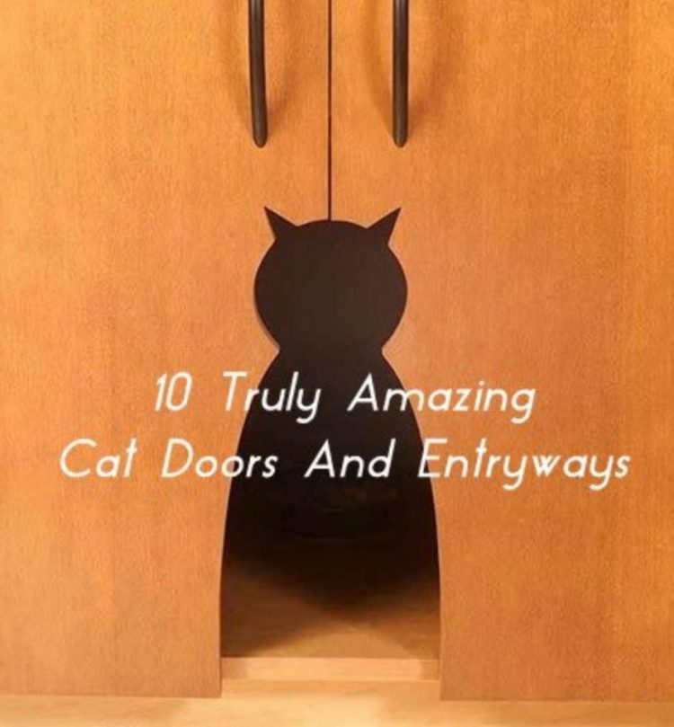 cat door number