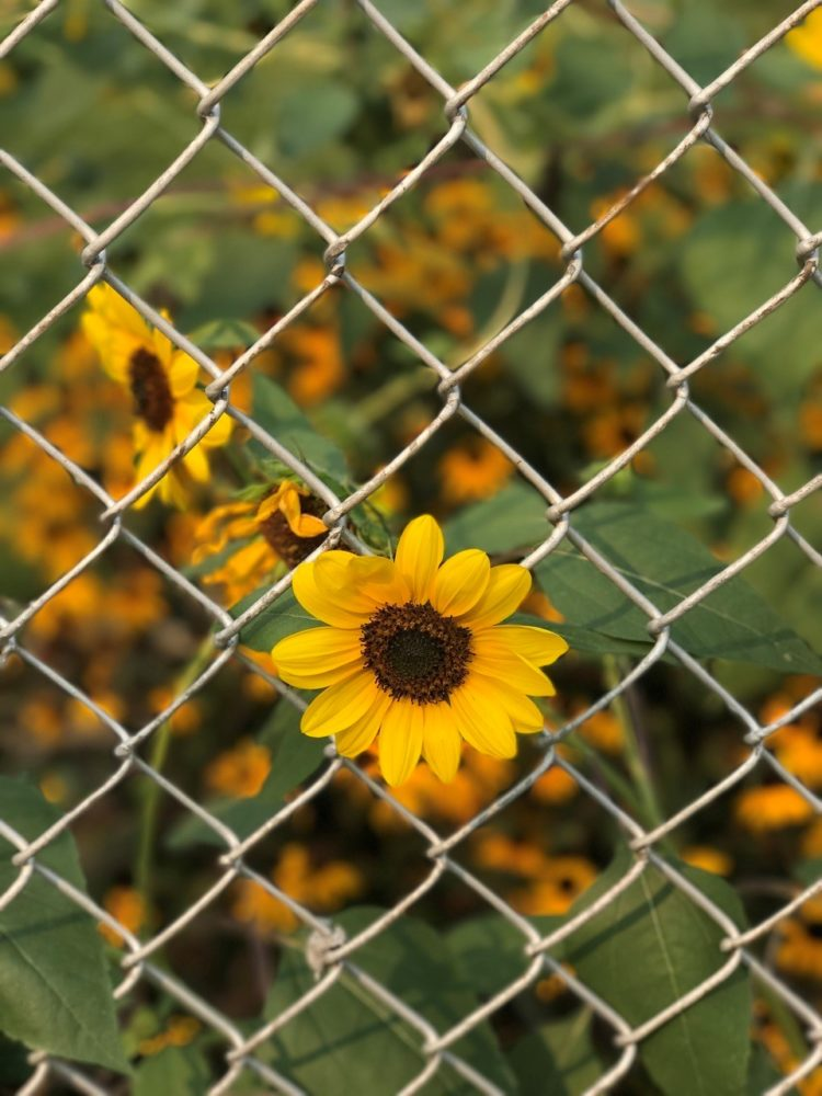 chain link fence inserts