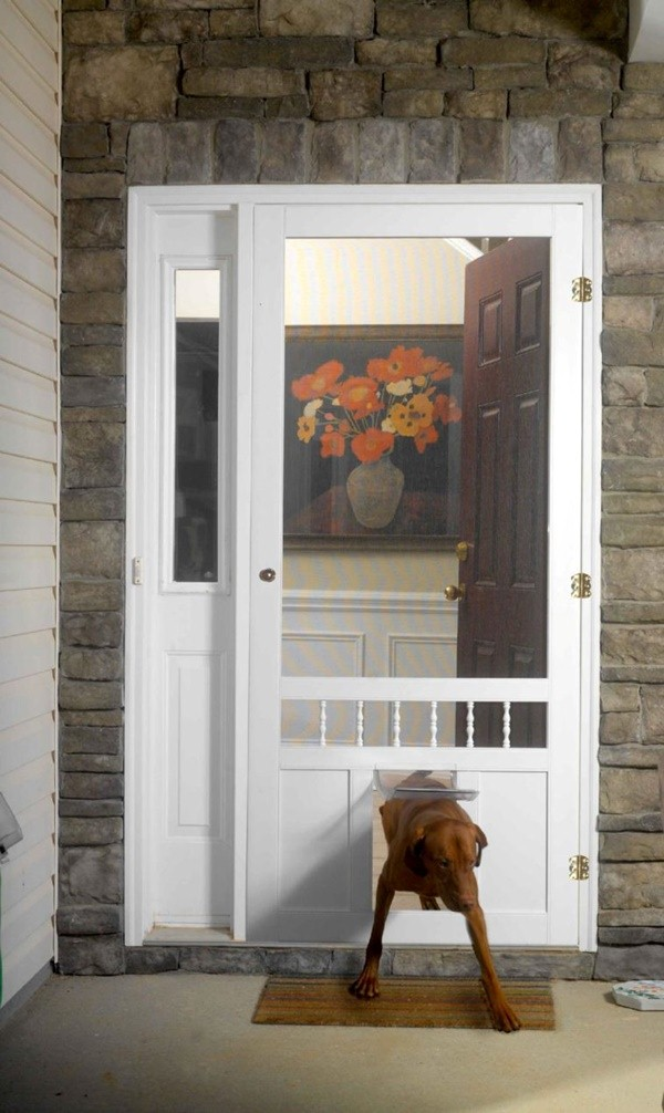 dog and doorbell