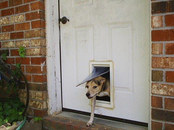 dog door activated by collar