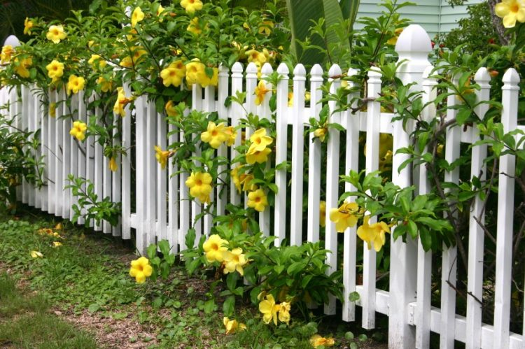 the picket fence burke