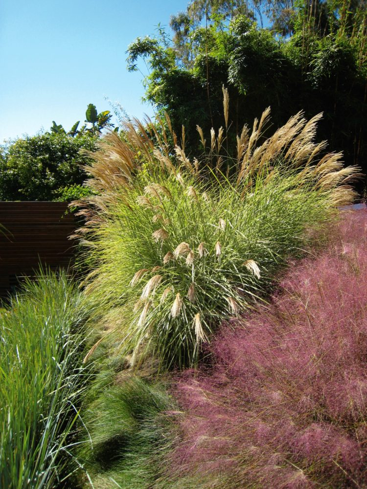 pink muhly grass is brown
