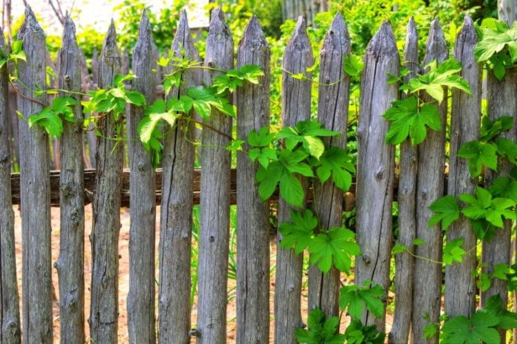 wood fence ideas for yard