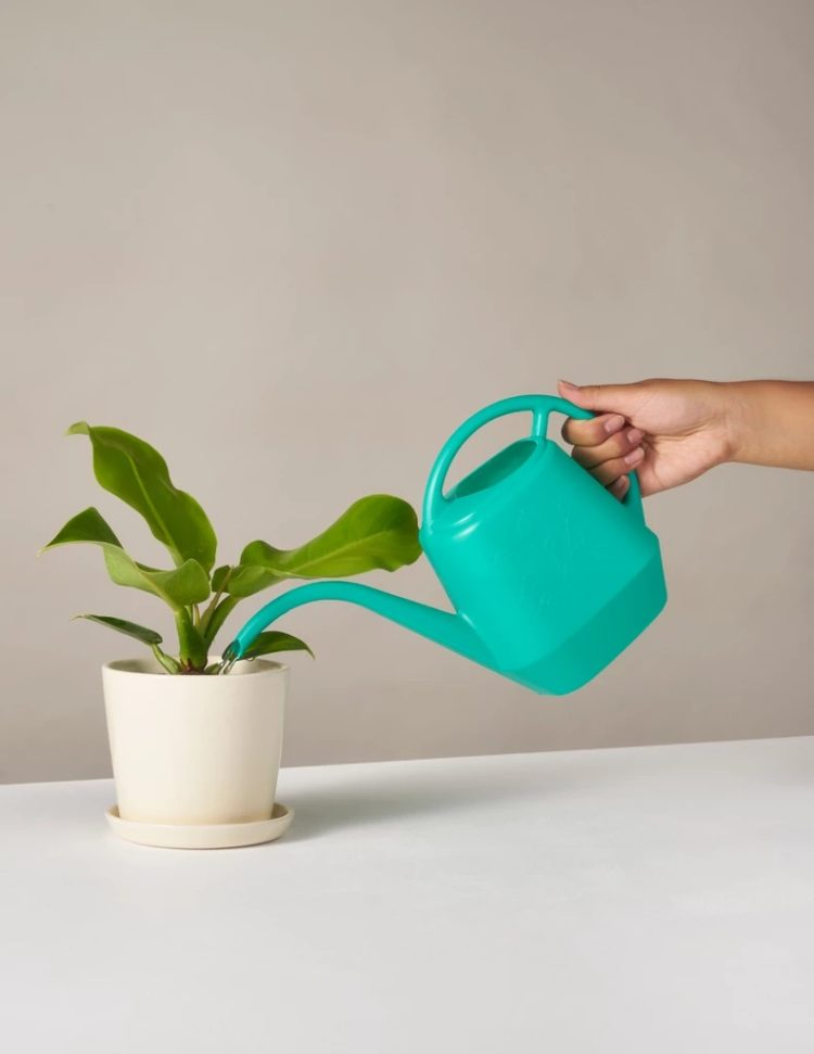 watering can big lots