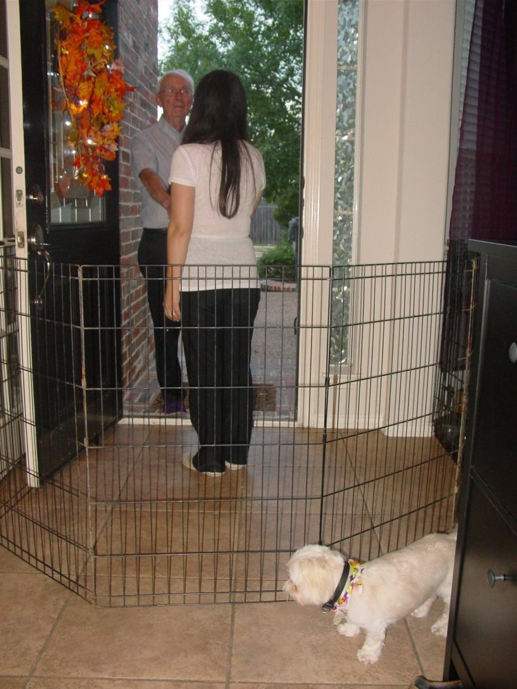 pet gate large