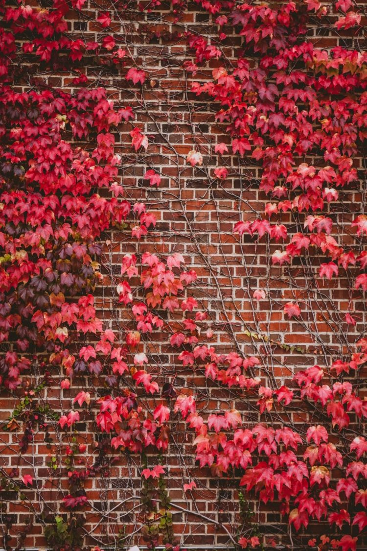 brick background hd pictures