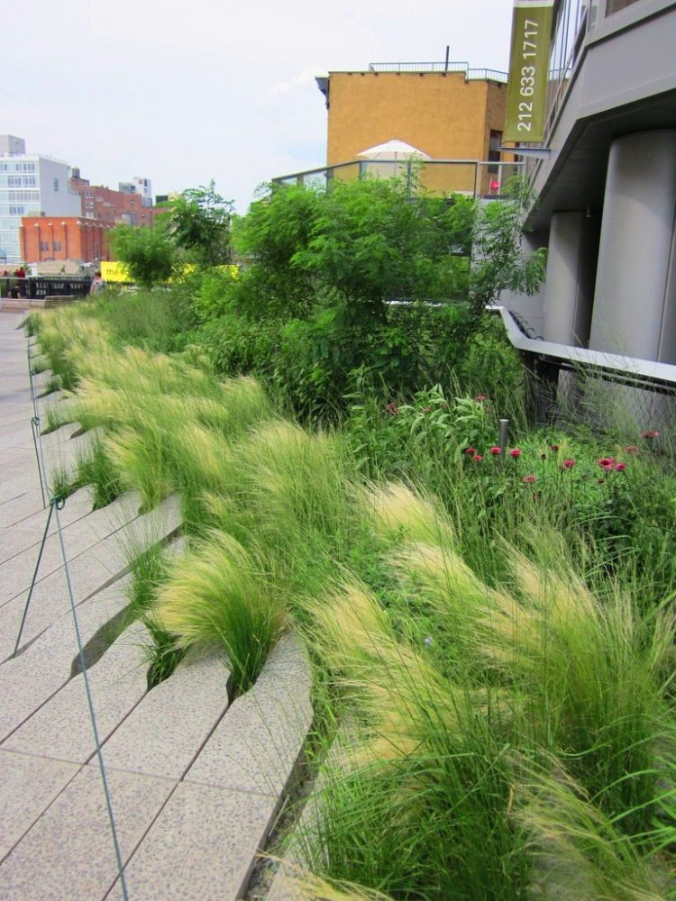 fountain grass garden ideas