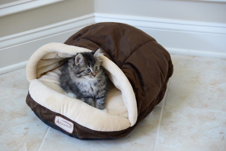 cat bed large