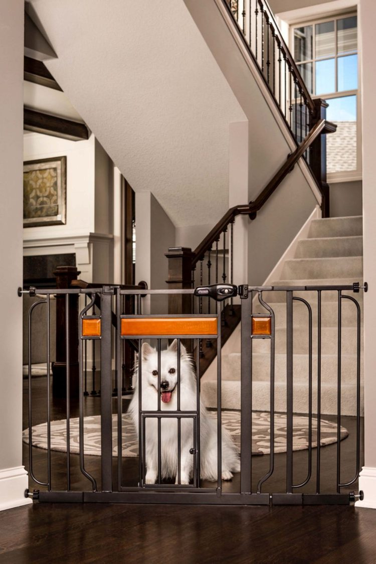 dog gates high
