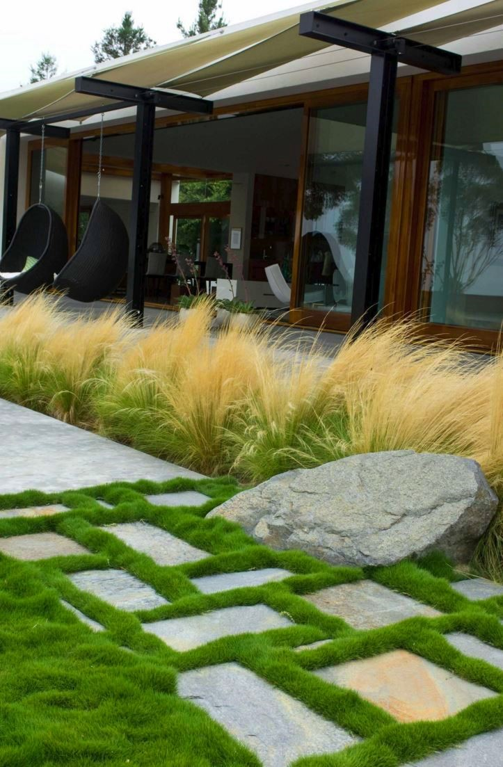 fountain grass height and width