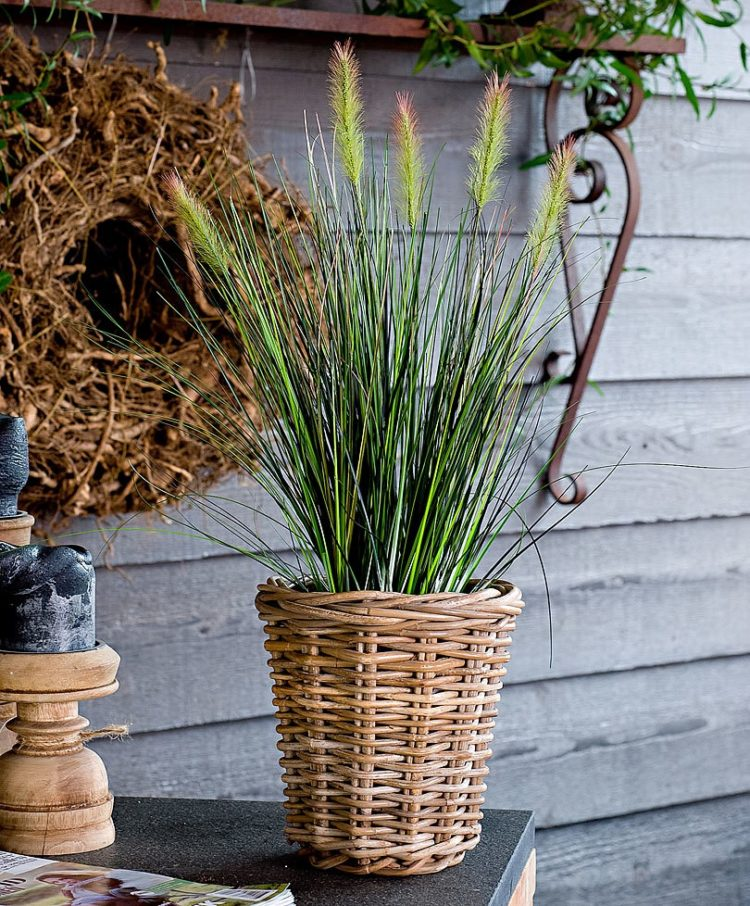 fountain grass monrovia