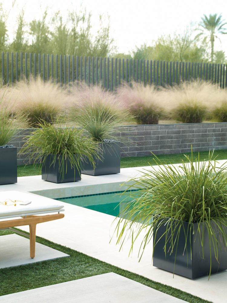 japanese fountain grass care