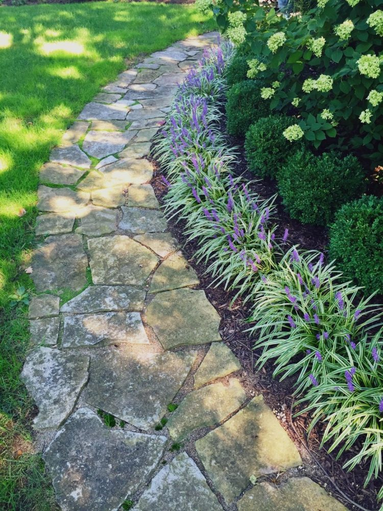 monkey grass how to plant