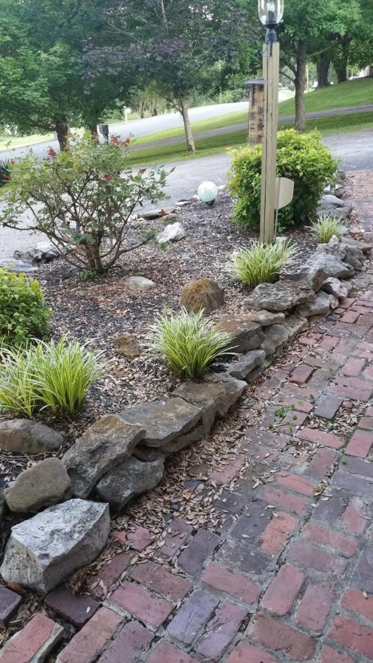 monkey grass how to maintain