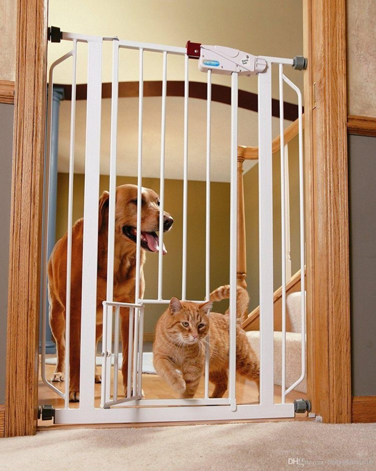 pet gate kittens