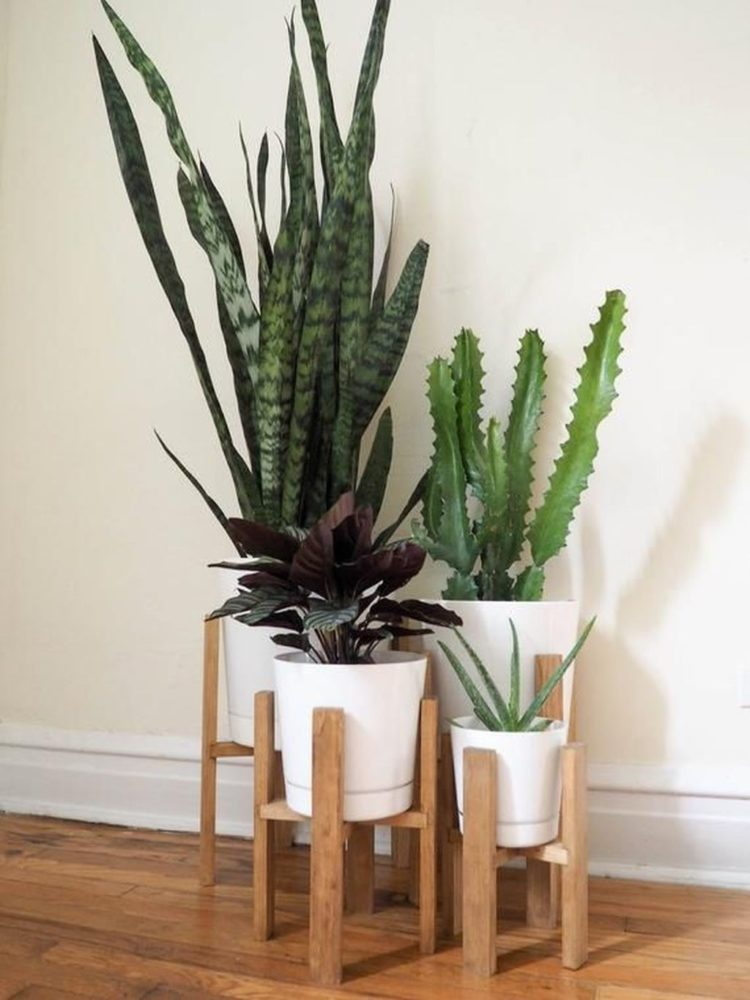 plant stand next