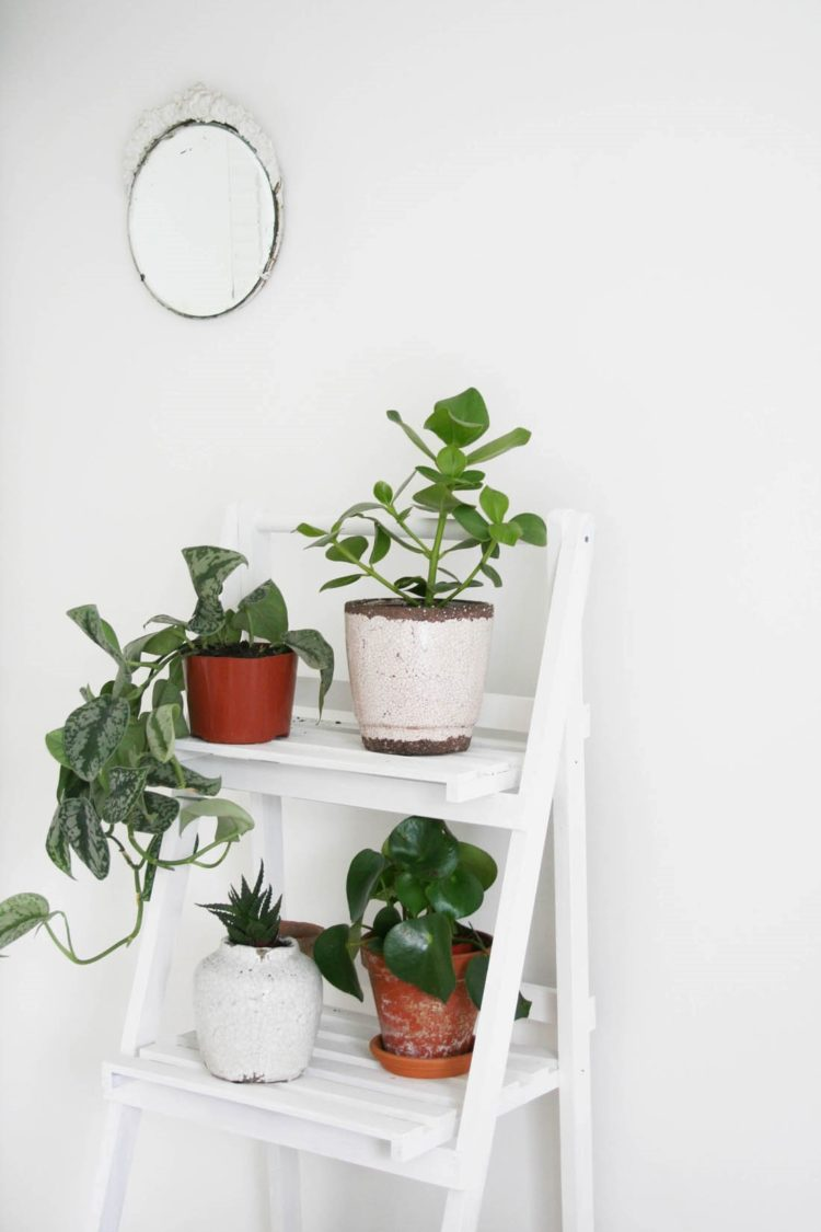 plant n stand
